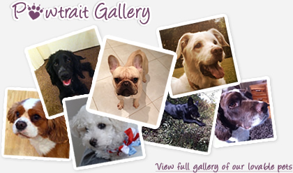 Pawtraits Gallery